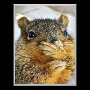 Castors, écureuils, putois, rongeurs, tapirs
